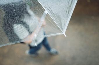 熱川バナナワニ園の雨の画像