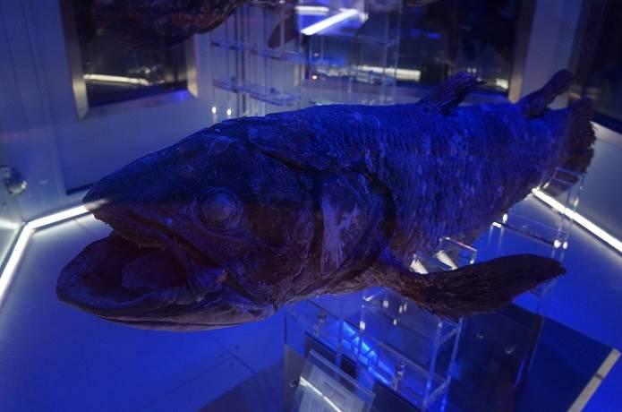 沼津にある深海水族館