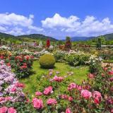 バラが咲き誇る河津バガテル公園