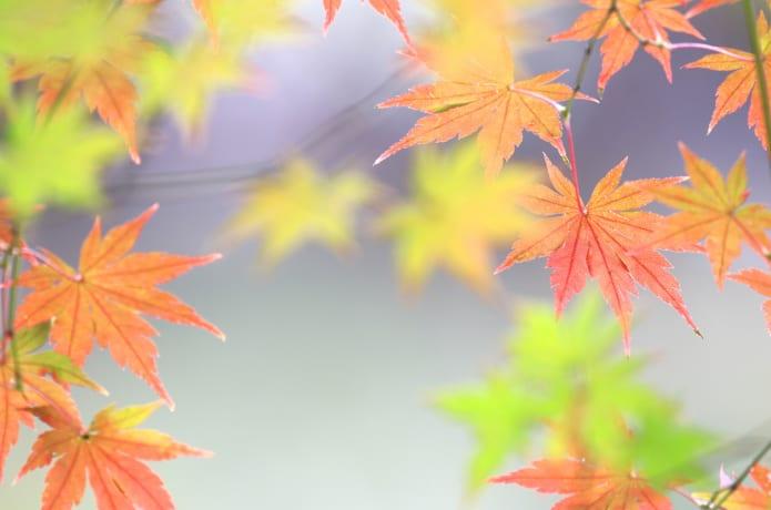 紅葉の始まりの画像