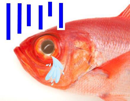 キンメプリンの金目鯛